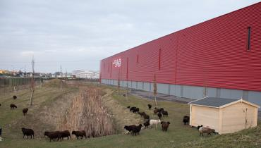 2012 : Première installation Ecomouton.